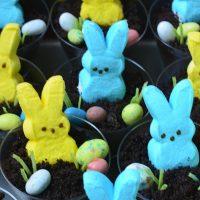 PEEPS Easter Dirt Cups
