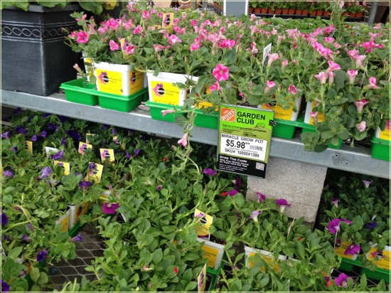 Miracle-Gro Flowering Plants home depot