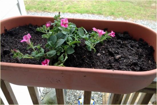 Miracle-Gro Flowering Plants