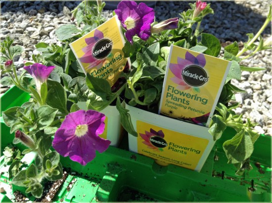 MiracleGro Flowering Plants