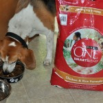 purina one smartblend chicken & rice