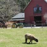 Drumlin Farm