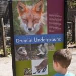 Drumlin Farm Wildlife Sanctuary