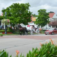 Frankenmuth horse drawn carriage ride