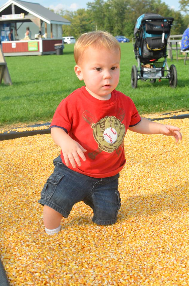 Corn Boxes at Sherman Farm