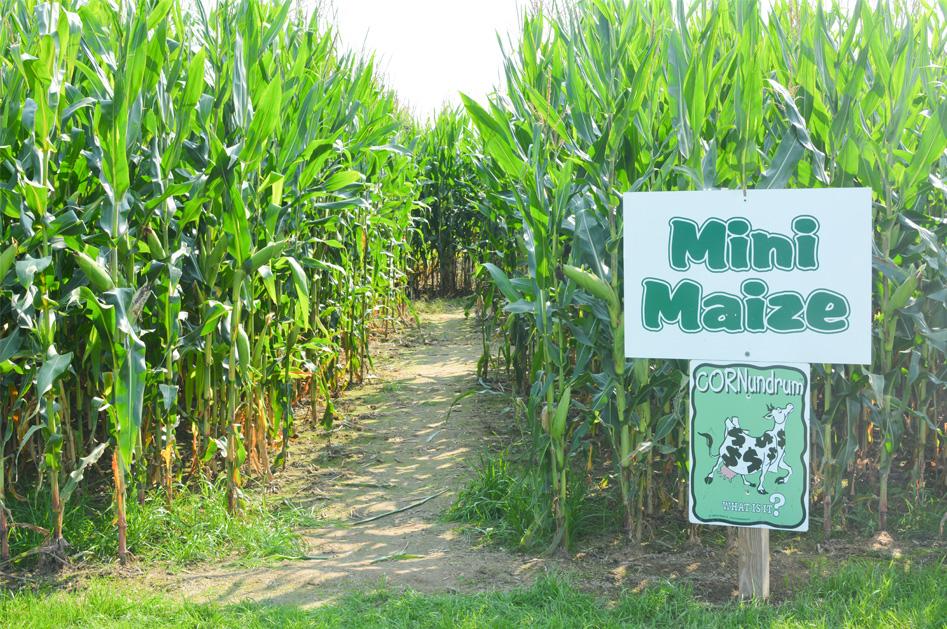 Sherman Farm Mini Corn Maze