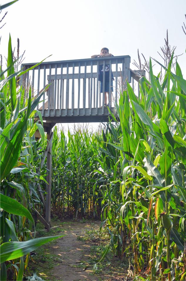 Sherman Farm Corn Maze 2