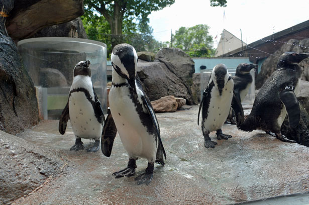 National Aviary Penguin